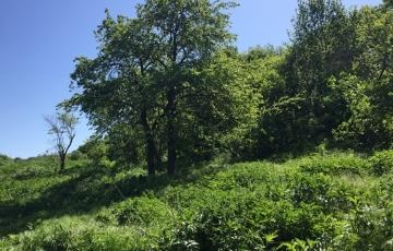 Продается участок в Белогорском районе, с. Красногорье